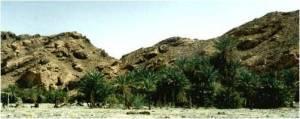 MonteSinaí_oasis de Elim2